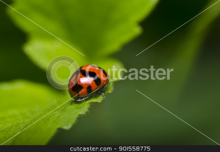 ladybug in green nature stock photo, ladybug in green nature or in the garden by sweetcrisis