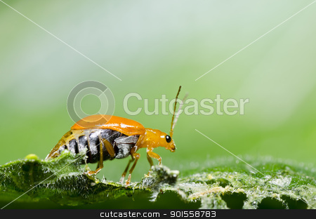 orange beetle in green nature stock photo, orange beetle in green nature or in garden by sweetcrisis