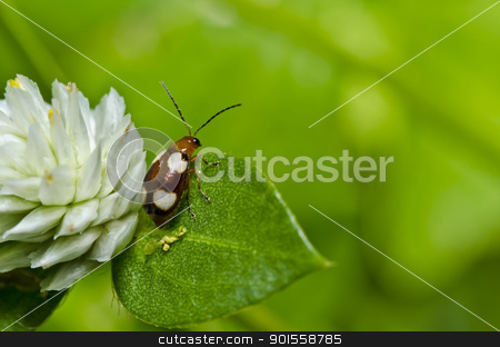 brown beetle in green nature or in garden stock photo, brown beetle in green nature or in garden by sweetcrisis