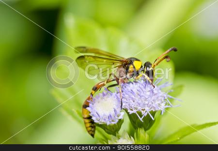 yellow wasp in green nature stock photo, yellow wasp in green nature or in garden by sweetcrisis