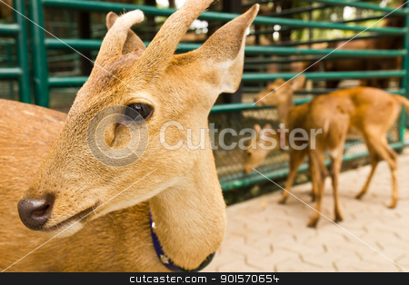 Deer head close-up1 stock photo, Deer head close-up at the zoo. by stoonn