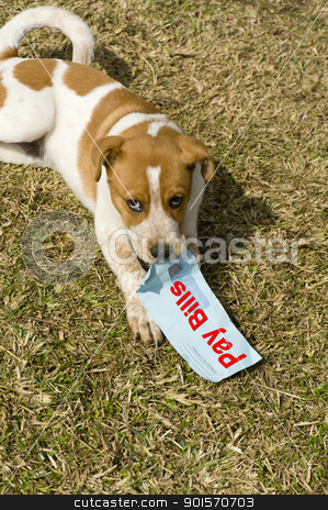 Pay Bills stock photo, pay your bills or let your dog have fun. by WScott