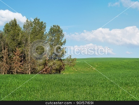Green meadow at the edge of pine grove stock photo, Green meadow at the edge of pine grove by Shlomo Polonsky