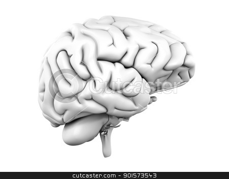 Human Brain stock photo, A human brain. Medical. 3D rendered Illustration. by Michael Osterrieder