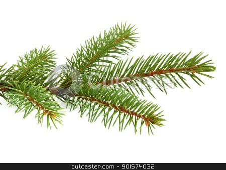Pine tree branch stock photo, Pine tree branch isolated on white backgrond by vtorous