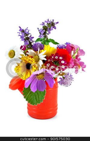 Bouquet of flowers in the nursery watering stock photo, Bouquet of flowers in a red children's watering can isolated on white background by rezkrr