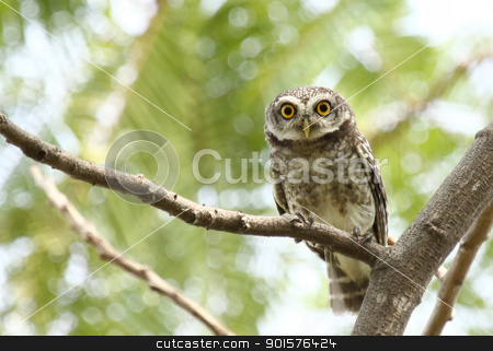 Owl looking camera stock photo, Owl looking camera on tree by kamonrat