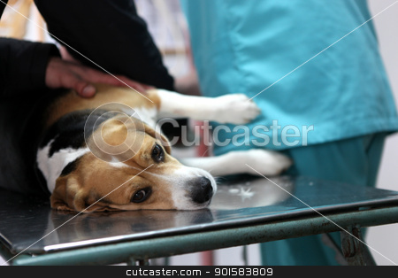 Dog at the vet in the surgery preparation room. stock photo, Dog at the vet in the surgery preparation room. by Nenov Brothers Images