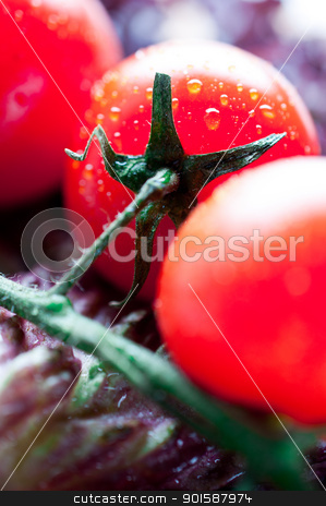 Tomatoes on lettuce leaves stock photo, Tomatoes on lettuce leaves close up by Nanisimova