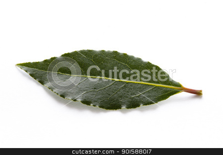 bay leaves stock photo, culinary bay leaves isolated on a white background by Lee Avison