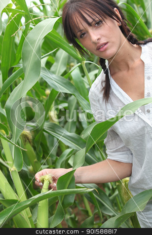 Agriculturist stood in corn field stock photo, Agriculturist stood in corn field by photography33
