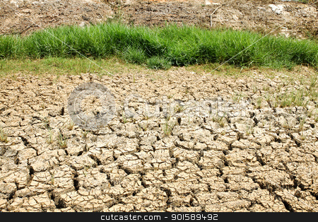 Cracked ground after flood with green plant stock photo, Cracked ground after flood with green plant by kamonrat