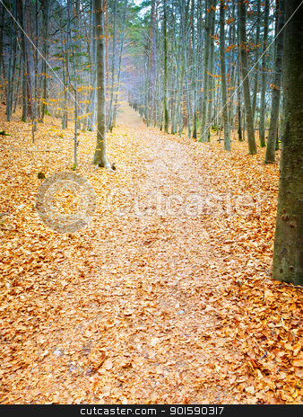 autumn forest stock photo, An image of a path in the autumn forest by Markus Gann