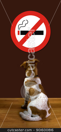 No Smoking stock photo, Puppy looking at no smoking sign. by WScott