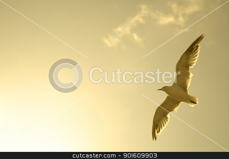 flying sea-gull stock photo, photo of above flying sea-gull, brown colored by Robert Remen