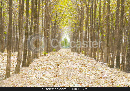 Pathway in the forest full of fallen dried leaves.  Road to a be stock photo, Pathway in the forest full of fallen dried leaves.  Road to a better world than here. by dacasdo
