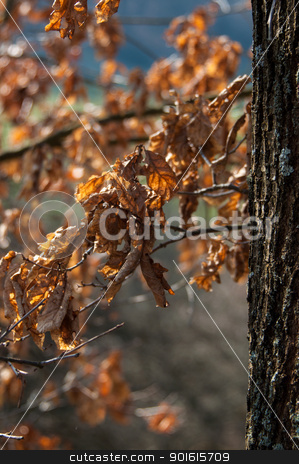 Autumn In Forest stock photo, Nice autumn scene in beech forest with great sunlight by Frank G?