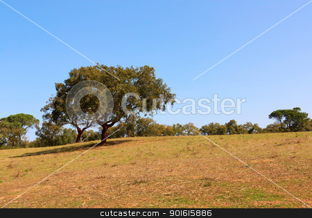 Oak Tree stock photo, Oak Tree against woods and blue sky, on sunny day by Paulo M.F. Pires