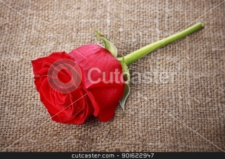 Red Rose stock photo, single bright red rose on old canvas by Petr Malyshev
