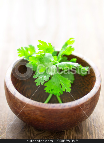 cilantro stock photo, close up of a bowl of cilantro by zkruger
