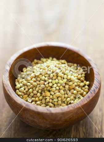 coriander seeds stock photo, close up of a bowl of coriander seeds by zkruger