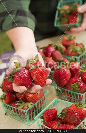 Farmer Gathering Fresh Strawberries in Baskets stock photo, Farmer Gathering Fresh Red Strawberries in Baskets. by Andy Dean
