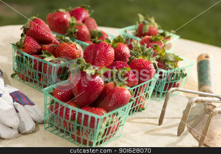 Baskets of Fresh Strawberries stock photo, Baskets of Fresh Strawberries with Gardeing Tools and Gloves Nearby. by Andy Dean