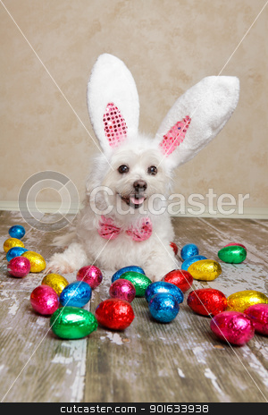 Easter bunny dog with chocolate easter eggs stock photo, An easter bunny dog surrounded by various colourful foil wrapped chocolate easter eggs. by Leah-Anne Thompson