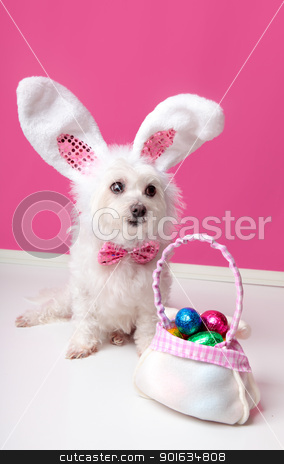 Little dog with a bag of chocolate easter eggs stock photo, A cute  little dog with rabbit bunny ears sitting beside a bag of assorted easter eggs.  Pink background. by Leah-Anne Thompson