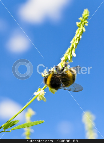 bee  stock photo, bee at flower against the blue sky by Sergej Razvodovskij