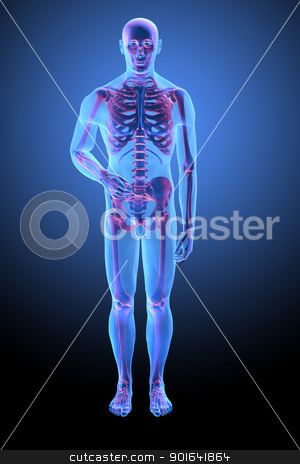 Human skeletal anatomy stock photo, Human anatomy with visible skelton - medical illustration by Mopic