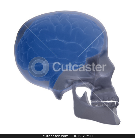 Skull scan with visible brain  stock photo, Skull scan with visible brain medicine illustration by Mopic