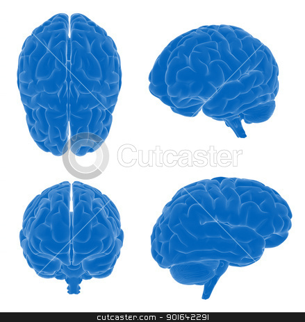 Human brain scientific illustration stock photo, Human brain scientific illustration - four different views  by Mopic