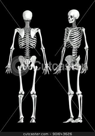 3D human skeleton medical illustration stock photo, 3D human skeleton medical illustration by Mopic