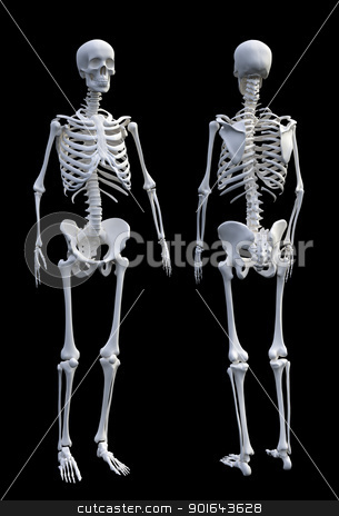 3d precise and realistic model of a Human skeleton stock photo, 3d precise and realistic model of a Human skeleton by Mopic