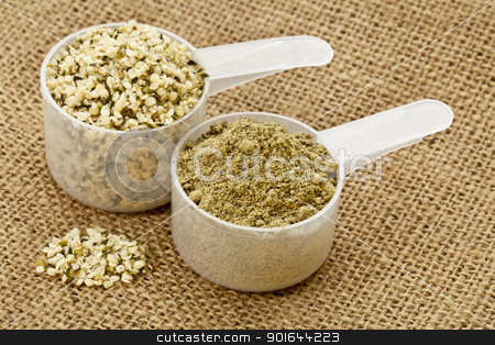 hemp protein powder and seeds stock photo, two scoops of raw organic hemp protein powder and shelled hemp seeds - super food rich in nutrients (proteins, antioxidants, amino and fatty acids) by Marek Uliasz