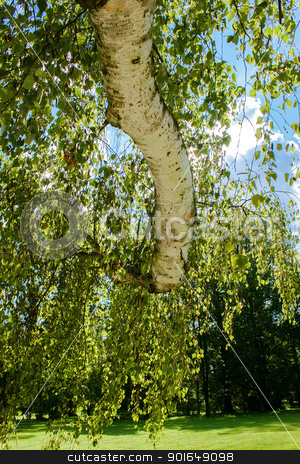 Tree of birch with leafs against spring blue sky stock photo, birch trunk with leafs against spring blue sky in park  by Artush