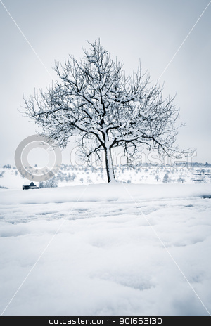 winter tree stock photo, An image of a tree in a winter landscape by Markus Gann