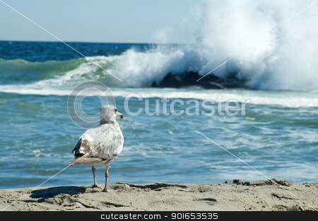 seagull stock photo, small seagull looking at a wave on a sandy coastline by Robert Remen