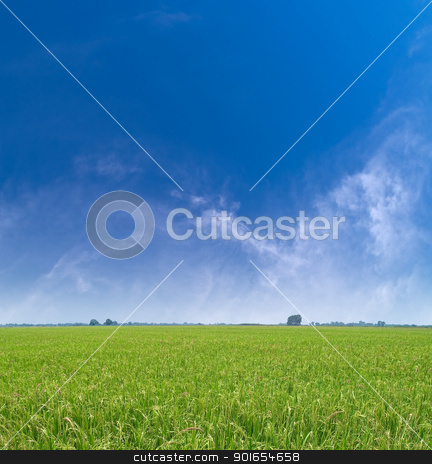 Paddy field stock photo, Paddy field with produce grains and beautiful sky by Exsodus