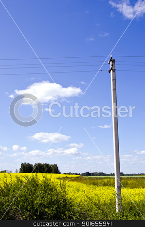 background of rapeseed field and electricity pole  stock photo, background of agricultural rapeseed fields and concrete electricity pole on background of blue sky.  by sauletas