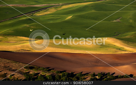 Yellow Airplane Green Wheat Fields Palouse Washington State stock photo, Yellow Airplane Green Wheat Grass Fields Palouse from Steptoe Butte Washington State Pacific Northwest by William Perry