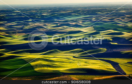 Green Wheat Fields Black Land Patterns Washington stock photo, Yellow Green Wheat Fields Black Dirt Fallow Land from Steptoe Butte at Palouse Washington State Pacific Northwest.  Steptoe Butte is the highest spot in the Palouse, Washington. by William Perry