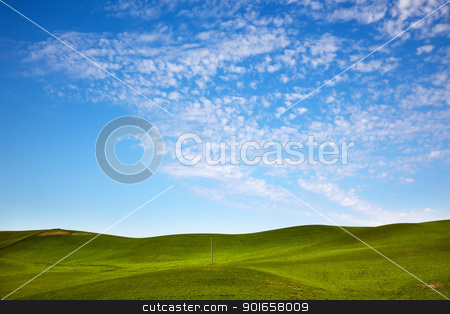 Green Wheat Grass Blue Skies Telephone Pole Palouse Washington  stock photo, Green Wheat Grass Fields Blue Skies Telephone Pole Palouse Washington State Pacific Northwest by William Perry