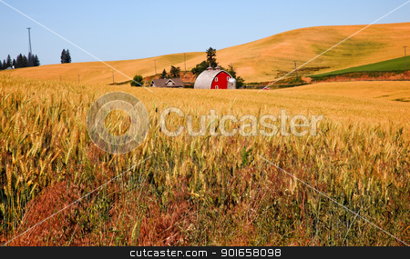 Red Barn in Ripe Wheat Field Palouse Washington State stock photo, Red Barn in Ripe Wheat Field Ready for Harvest Palouse Washington State Pacific Northwest by William Perry