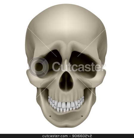 Human Skull stock photo, Freaky Human Skull. The emotion of sadness. Illustration on white. by dvarg