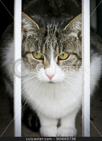 cat watching stock photo, An image of a cat looking out of the window by Markus Gann