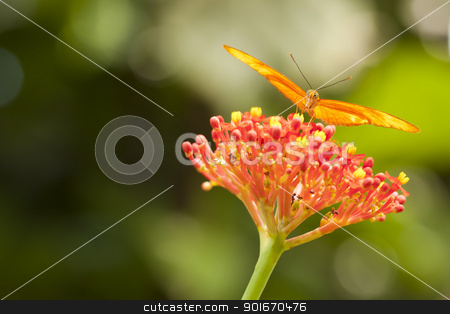 Beautiful Orange Butterfly on Colorful Flower stock photo, Beautiful Orange Butterfly on Colorful Flower Against Green Background. by Andy Dean
