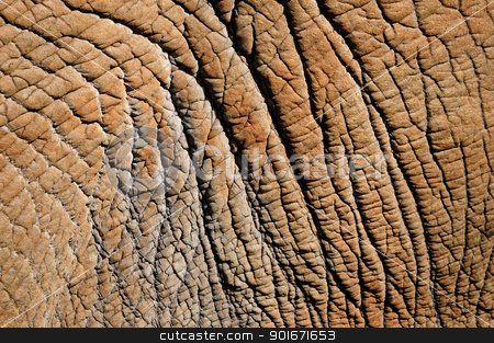 Detail of elephant skin stock photo, Close-up detail of African Elephant hide or skin by Grobler du Preez