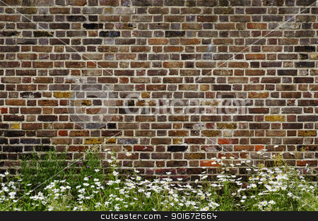 Brick wall and daisies stock photo, Old brick wall and daisies by Dutourdumonde